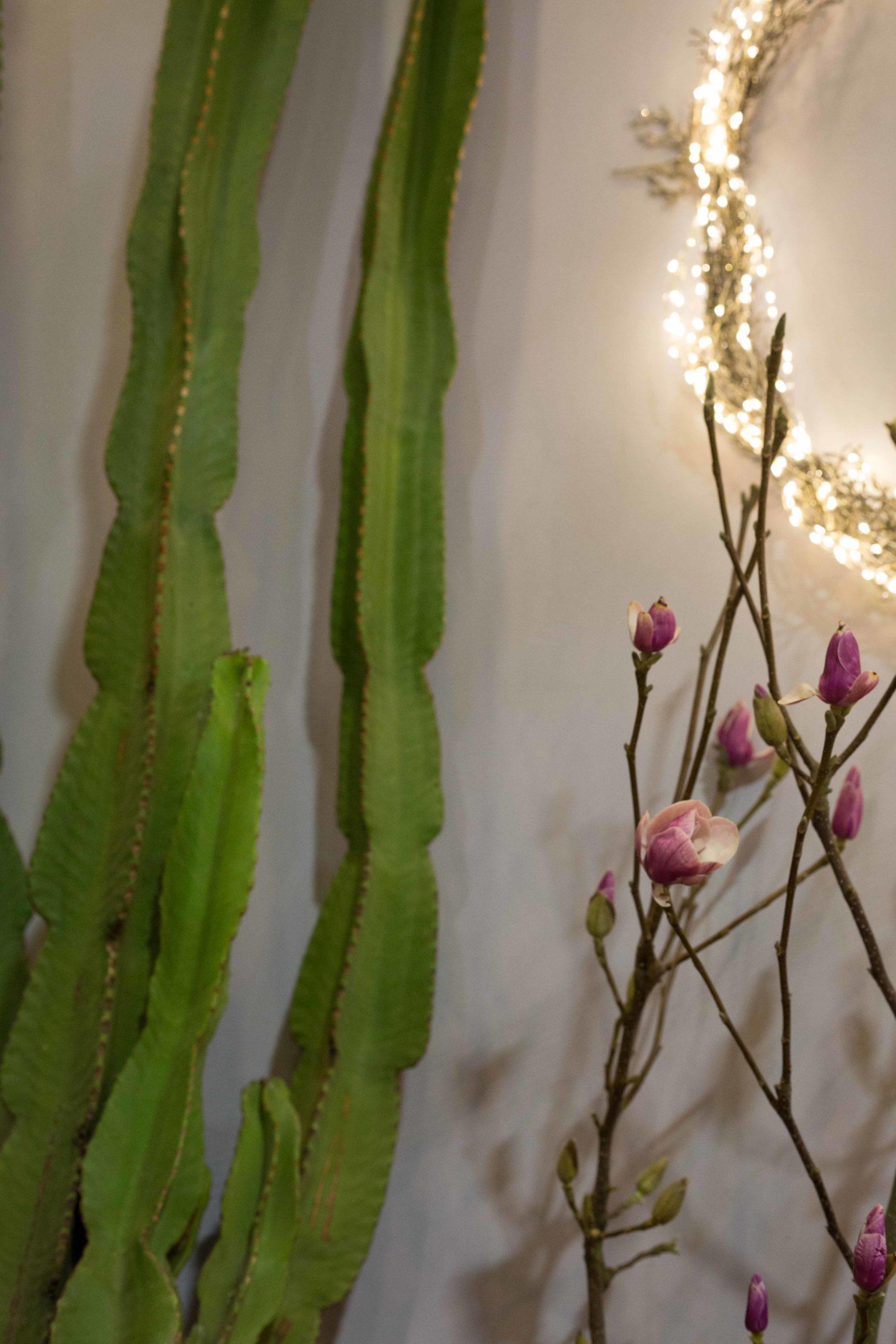 Cactus-Maison-des-Fleurs-Fleuriste-dans-5eme-arrondissement